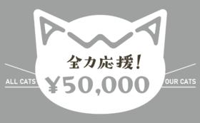 【リターン不要】あわねこ全力応援コース(50,000円)