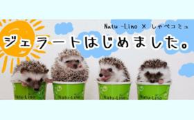 Natu-Lino × しゃべコミュコラボジェラート20個セット