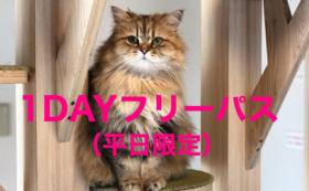 ②1DAYフリーパス(平日限定ドリンクバー付き)