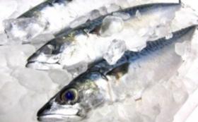 【雄勝の特選魚介を自宅で味わう!】朝獲れ鮮魚と貝類お楽しみセット
