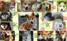 動物たちの幸せを全力応援コース