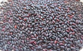 健康古代米 黒米 (朝紫)1㎏