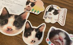 にゃんこ幸せ応援コース:猫ちゃんステッカー
