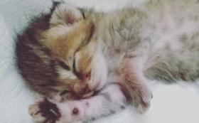 赤ちゃん猫頑張れ(1)