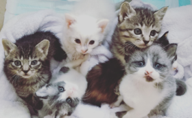 赤ちゃん猫頑張れ(2)