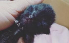 子猫頑張れ(1)