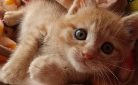 子猫頑張れ(2)