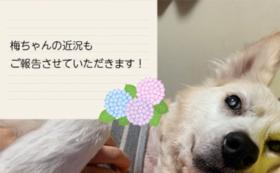 お礼のお手紙に梅ちゃんの写真を同梱し郵送します
