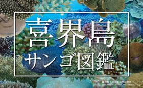 サンゴ図鑑【正式出版】