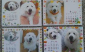 お礼のお手紙に1年分photoカレンダーを添えて