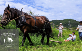 【体験グループチケット・里山コース 馬ソリ】 シェアホースをお得に楽しみたい方向けチケット