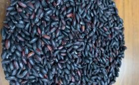 健康古代米 黒米(朝紫)1.8kg