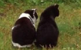 不幸な命を産まさない 全力で応援コース 10匹の野良猫さんの不妊手術費用になります