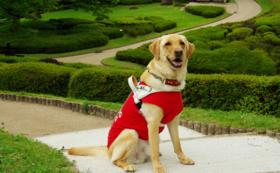 【社会で支える盲導犬!を応援】3万円
