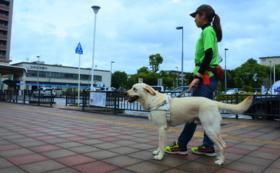 【社会で支える盲導犬!を応援】10万円