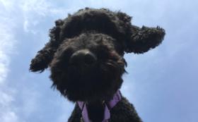 犬たちのオリジナルタオル&ポストカードセット