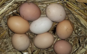 自家製な卵 (10個)