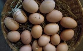 自家製な卵 (10個 x 10回)