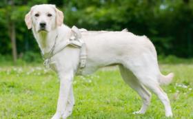 【社会で支える盲導犬!を応援】5万円