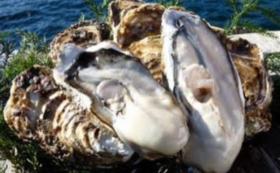 雄勝の海の幸をお届け!殻付き真牡蠣12枚
