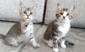 子猫全力サポート(1)