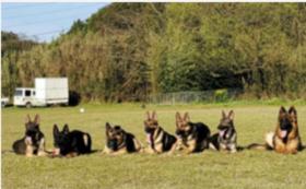 災害救助犬・警察犬訓練の様子など収めた画像をお送りします!