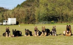 災害救助犬・警察犬訓練カレンダーをお送りします!