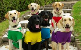 【社会で支える盲導犬!を応援】50万円