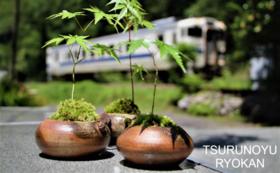 【おすすめ】鶴之湯旅館をミニ苔盆栽で見守るコース