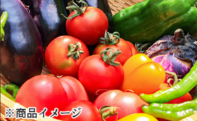 旬の野菜詰め合わせセット(12品)×2回
