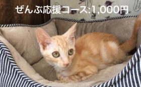 ぜんぶ応援コース:1,000円