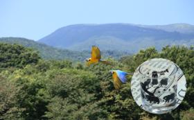 【完売】F 体験して応援|年間パスポート・トナカイの角&鳥の羽