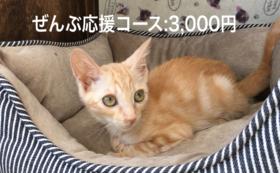 ぜんぶ応援コース:3,000円
