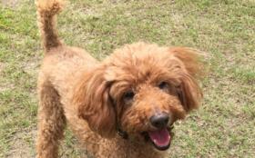 C:【全力応援】保護犬の幸せのために 2日分コース (ご支援金で2日分の活動存続できます)