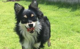 D:【全力応援】保護犬の幸せのために 1週間分コース(週5日営業換算) (ご支援金で1週間分の活動存続できます。)
