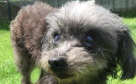 F:【全力応援】保護犬の幸せのために 1か月分コース(週5日営業換算)(ご支援金で1か月分の活動存続できます)