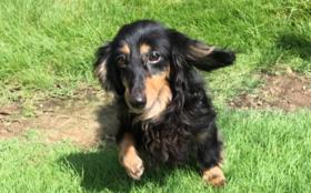 H:【全力応援】保護犬の幸せのために 半年分コース(週5日営業換算)(ご支援金で半年分の活動存続できます)