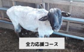 全力応援コース【10,000円】