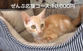 ぜんぶ応援コース:10,000円