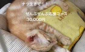 ナツ生きて!!ぜんぶぜんぶ応援コース:30,000円