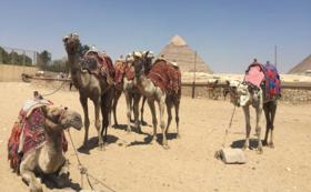 憧れの地エジプト、個人旅行サポート
