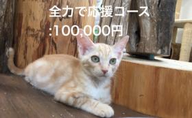 全力で応援コース:100,000円