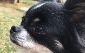 E:【全力応援】保護犬の幸せのために 2週間分コース(週5日営業換算) (ご支援金で2週間分の活動存続できます。)