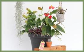 グッズで応援|植物コース