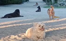 野良犬のご飯①