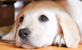 【年間の狂犬病ワクチン登録費用約80頭分】ご支援コース