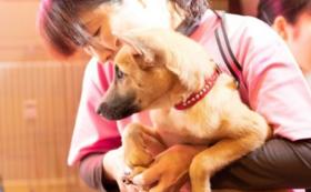 【税額控除対象】動物に優しい企業様ご支援プラン ゴールドサポーターコース