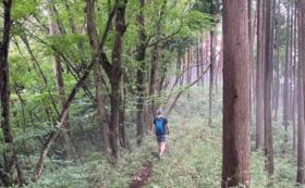 ■遊び方■静かな森を歩き、自然と人と対話する1dayリトリート@檜原村