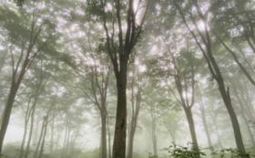 ■遊び方■キャンプ泊で自然の中で感覚を開くリトリート@長野県飯山の森(1泊2日)+小布施町の前泊