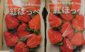 静岡県掛川市産紅ほっぺ2パック
